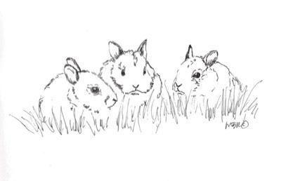 nature 06.21 baby bunnies