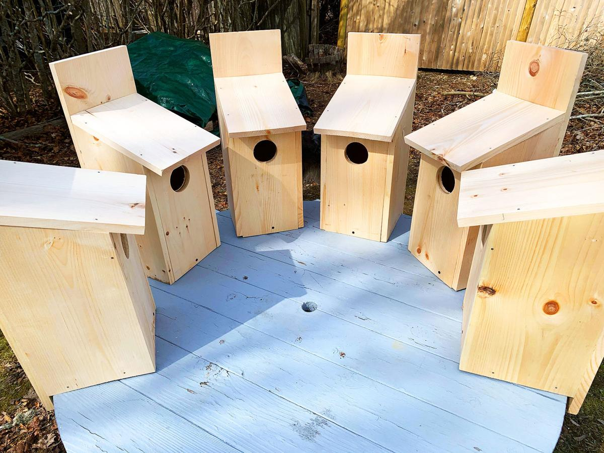 Owl Nesting Box Project Takes Hold With Bird Lovers