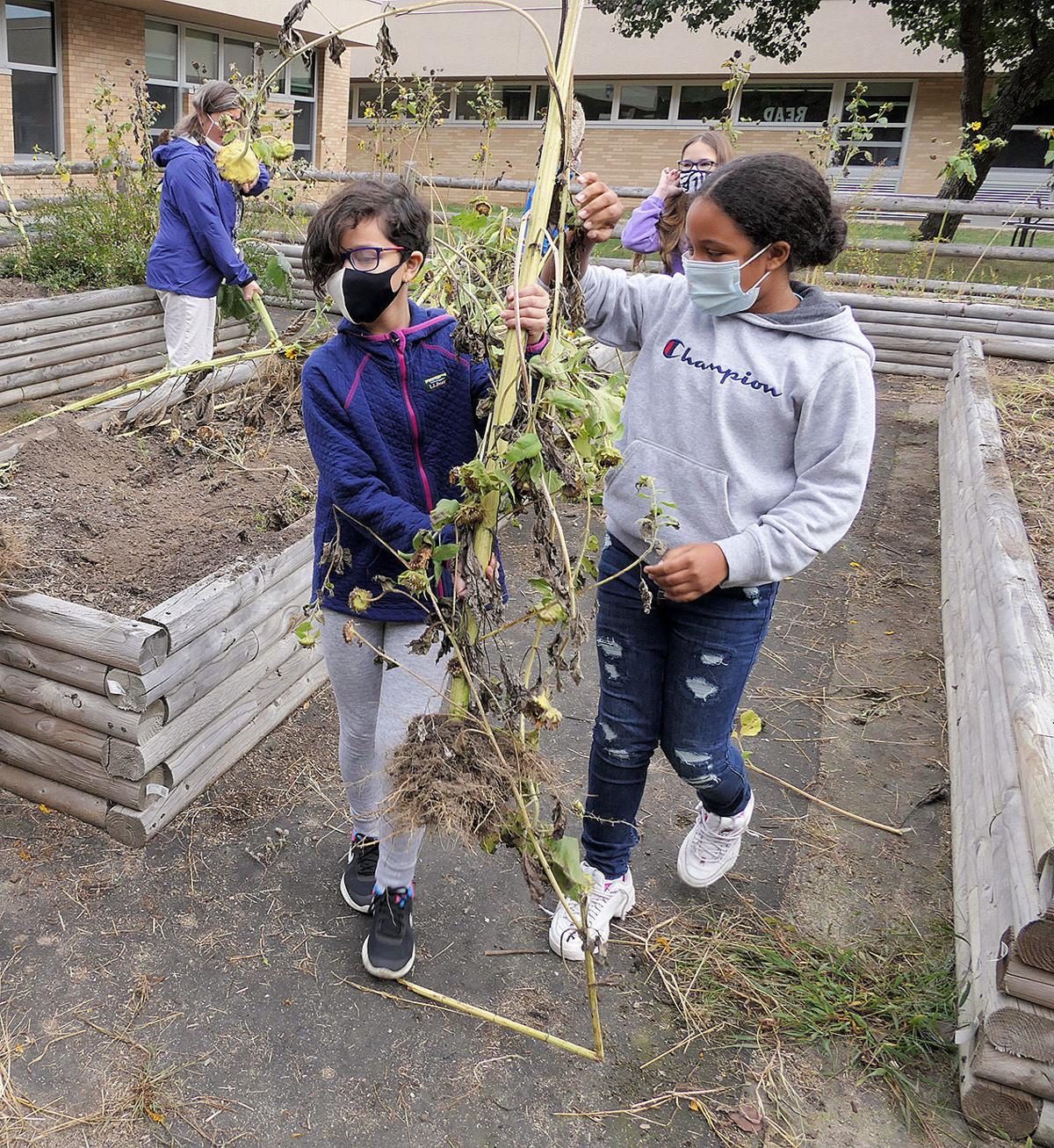 Quashnet School Garden