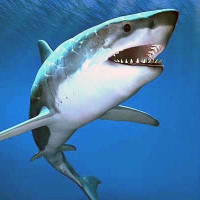 CCMNH Sharks