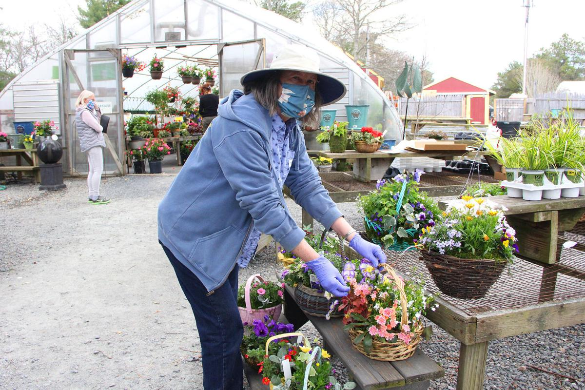 Cape Codders Turn To Gardening During Pandemic