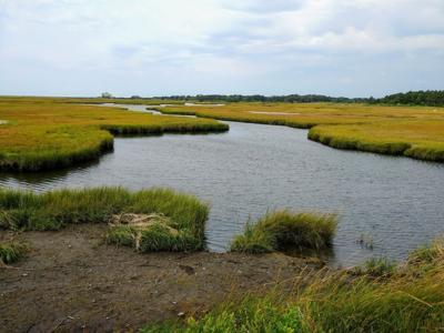 Great Sippewissett Marsh