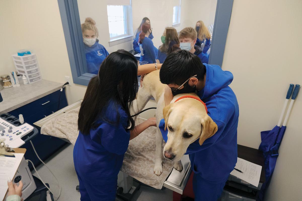 UCT Veterinary Services Program