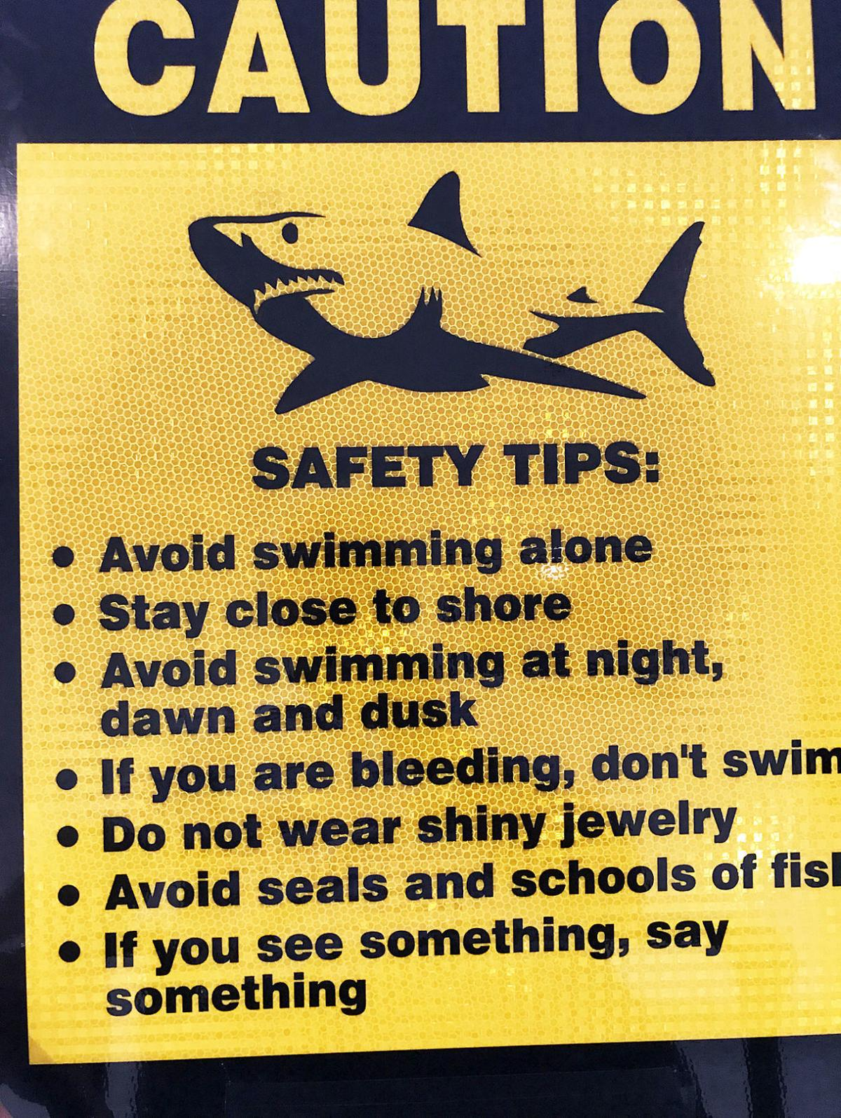 Bourne DNR Chief Offers Shark Sighting Protocols