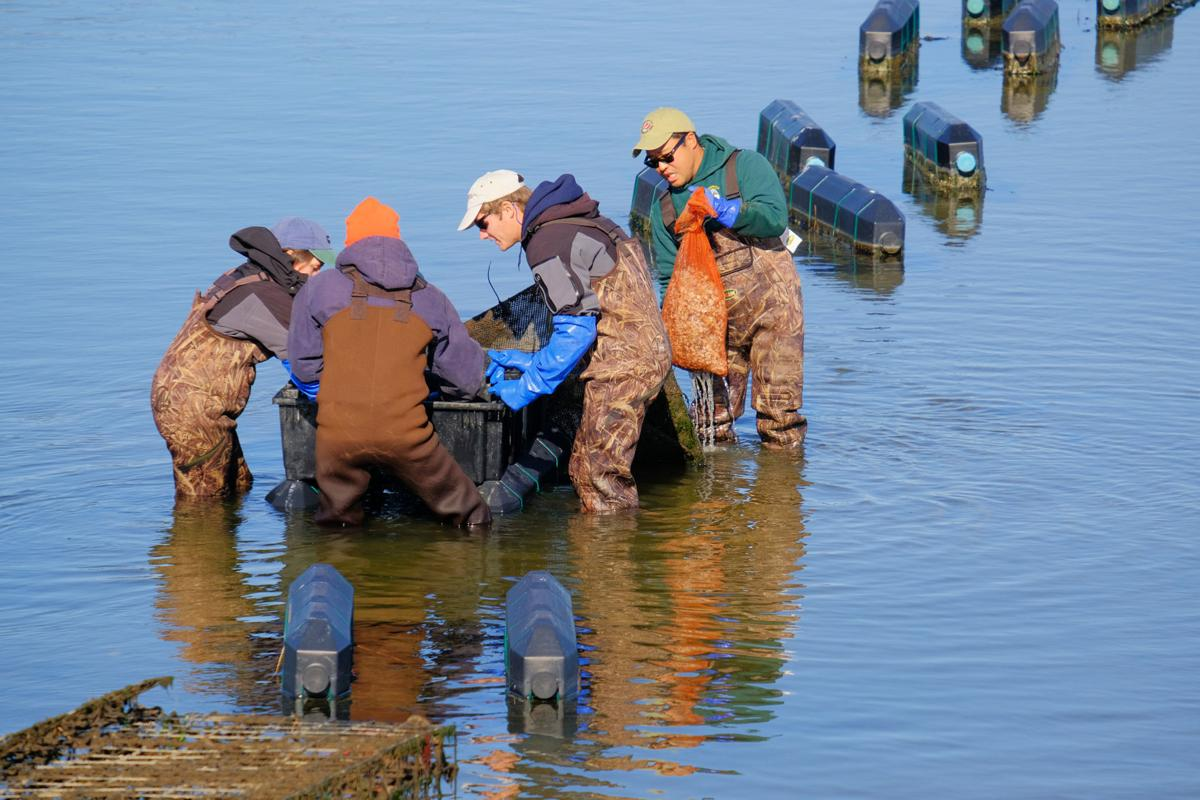 Mill Creek Oyster Beds