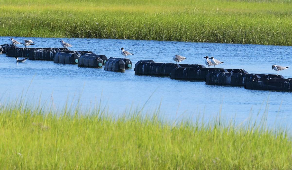 Sandwich Boardwalk Marsh