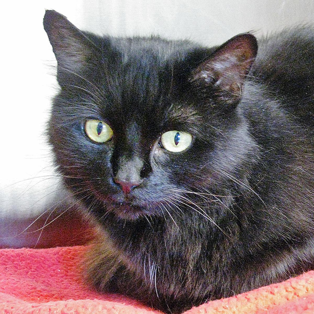 People For Cats - September 6, 2019 | Falmouth | capenews net