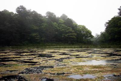 Algae Mats