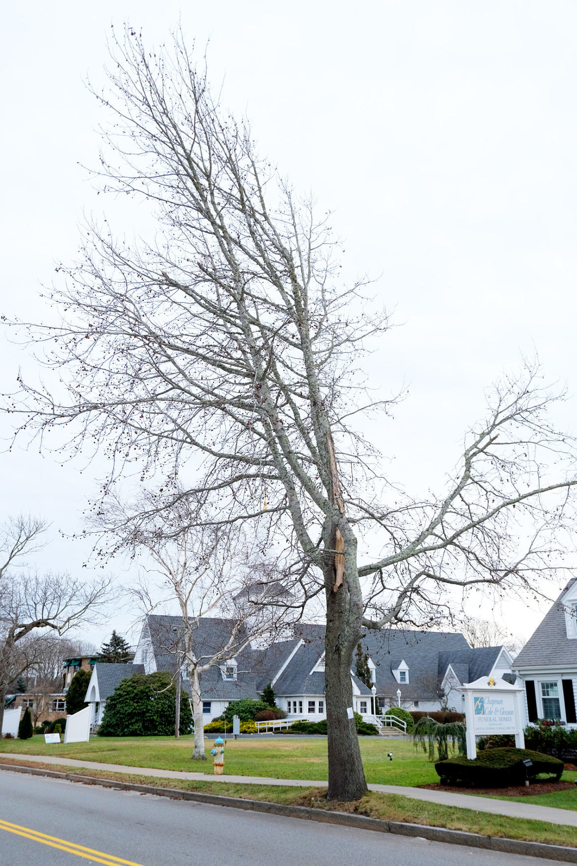 Tree Removal Hearing
