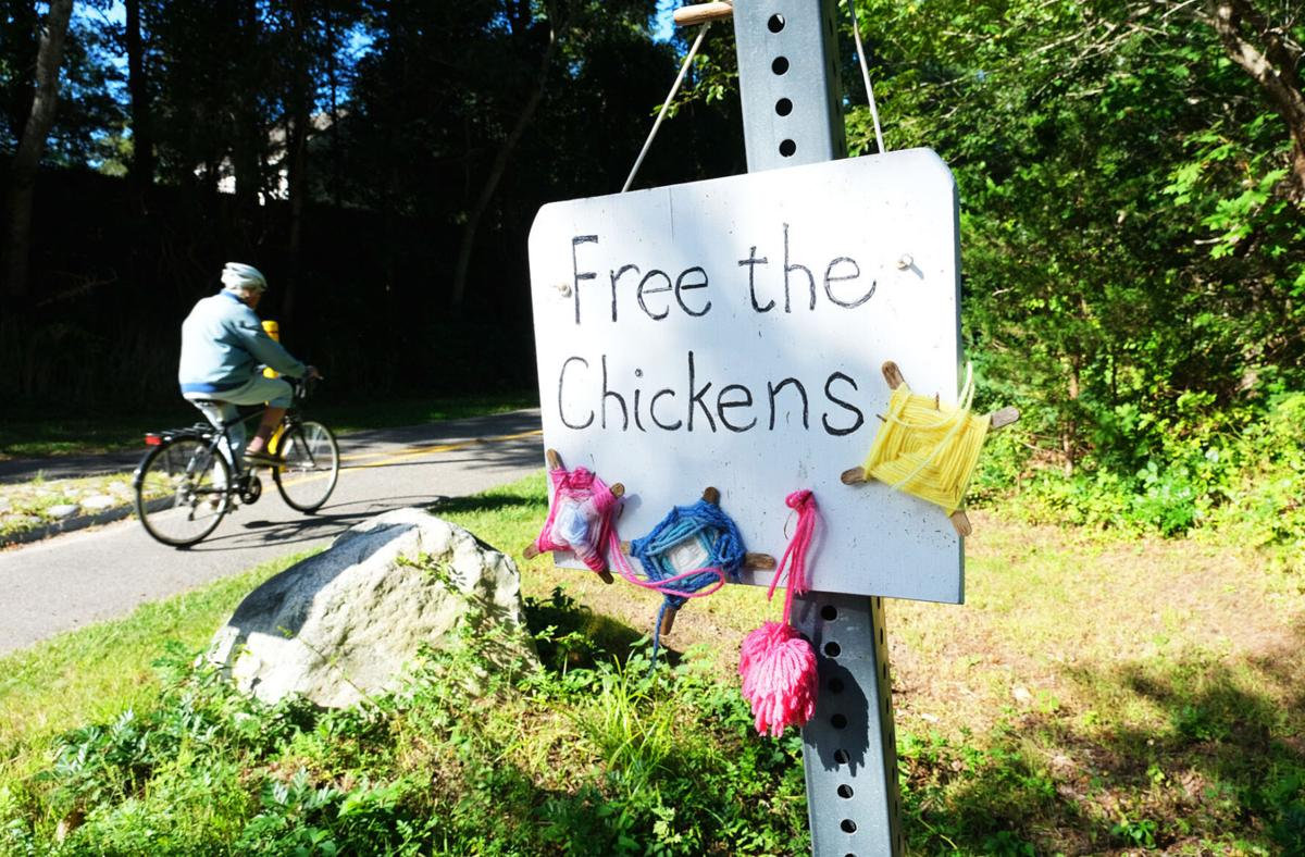 Free The Chickens