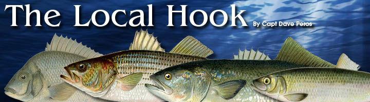 CapeNews.net - Local Hook