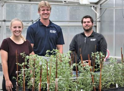 Team works to treat chronic diseases with garbanzo beans