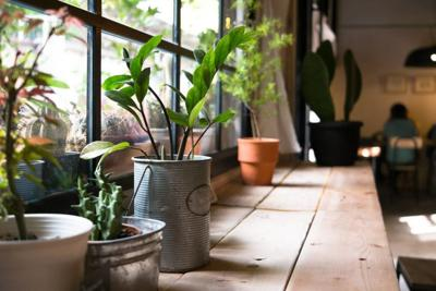 Five simple steps for great indoor gardens