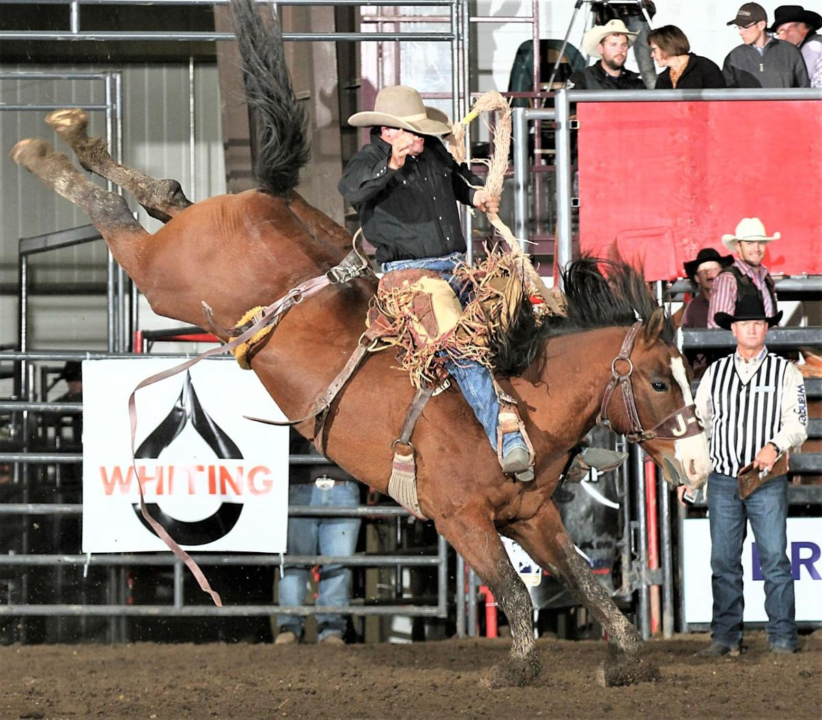 Local bucking horses, bulls selected for excellence in pro rodeo