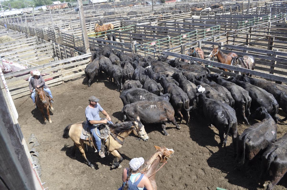 Fort Pierre Livestock Auction 2017