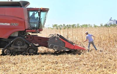 Spring corn harvest, wet ground leads to prevented planting