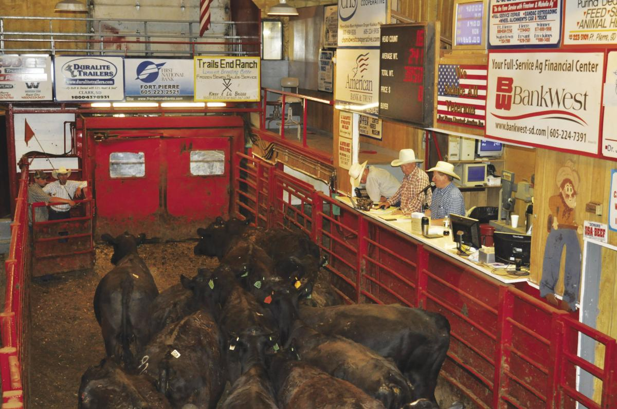 Fort Pierre sales barn seeing higher numbers as drought