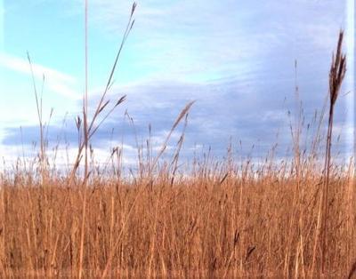 Habitat: The key to your hunting season