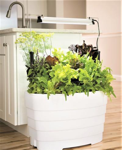 Expand your edible garden indoors