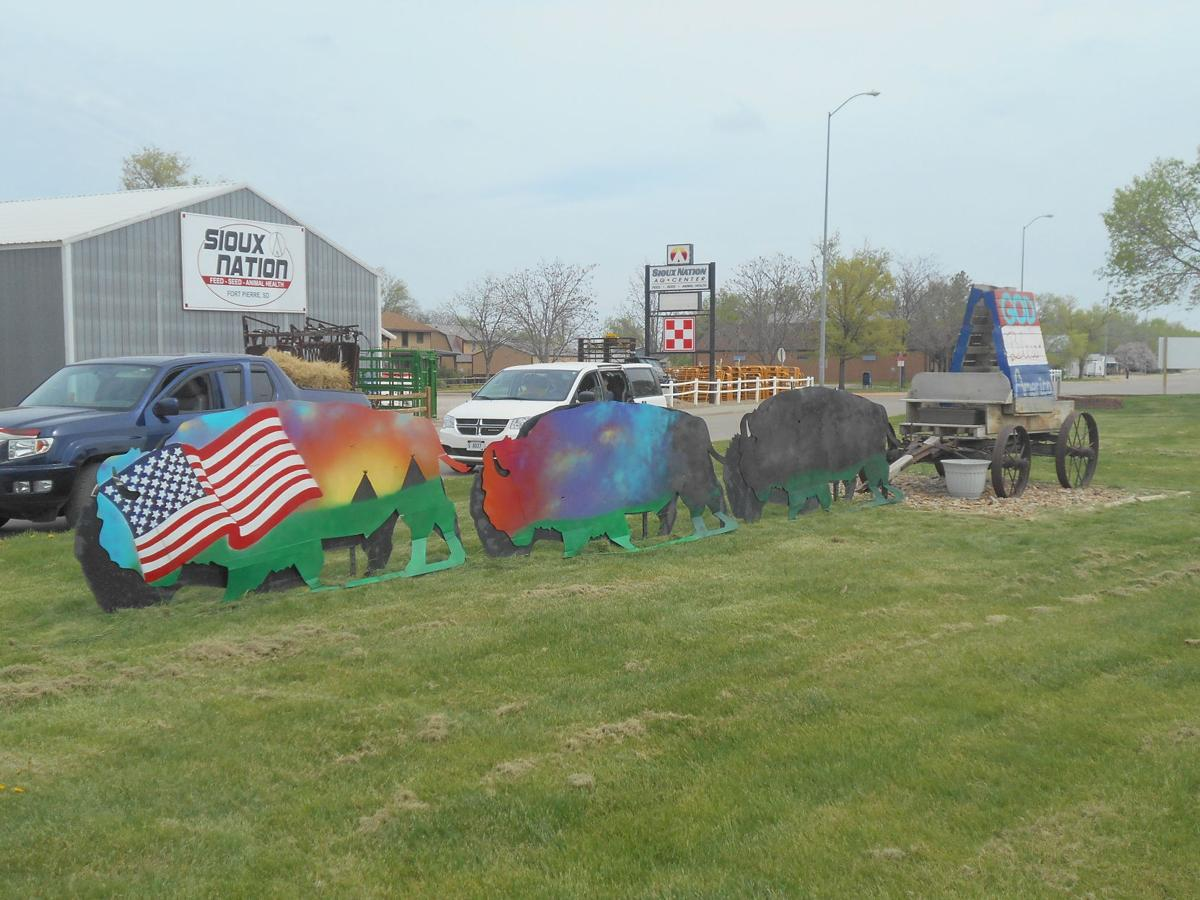 painted buffalo herd
