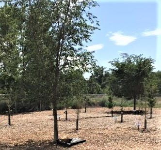 Tour the Community Orchard - open house Oct. 15