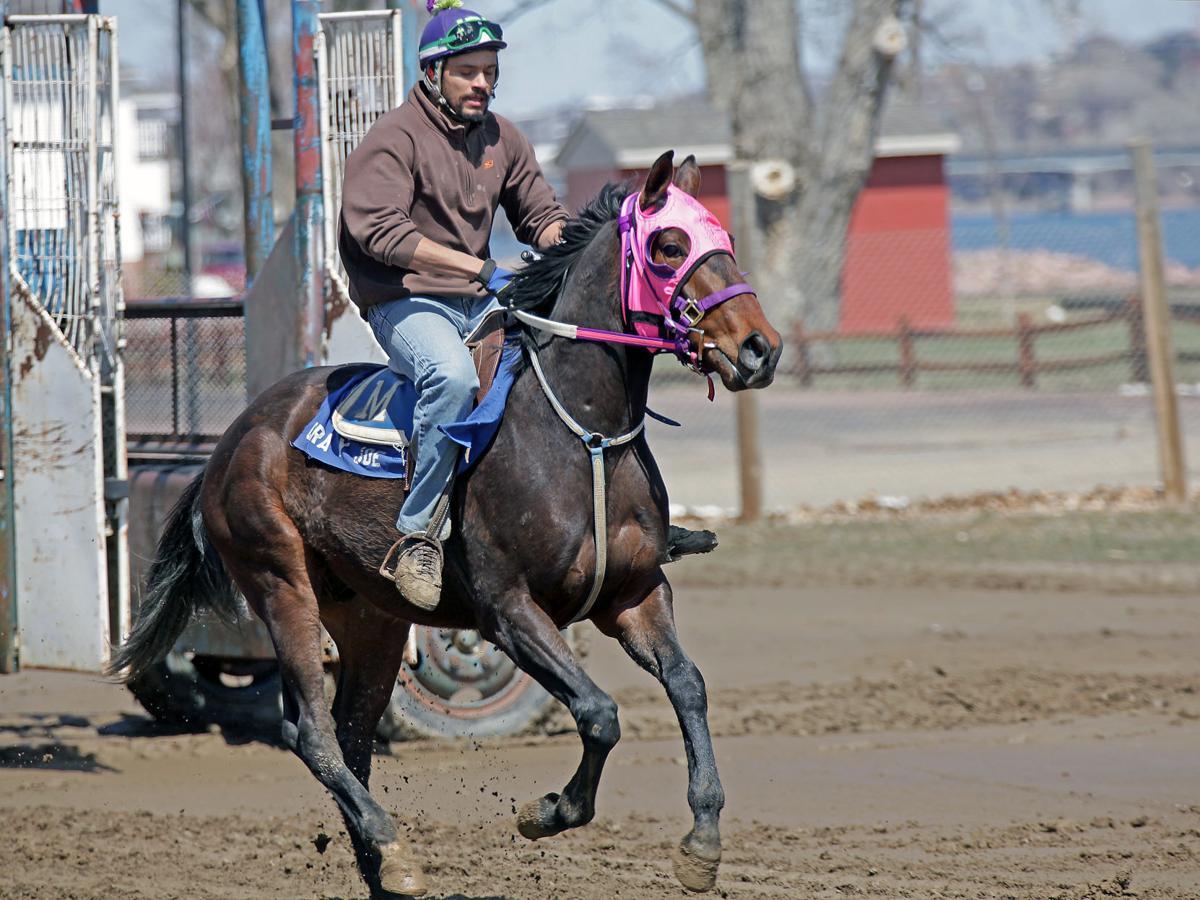 cropped galloping gate behind IMG_6700.jpg