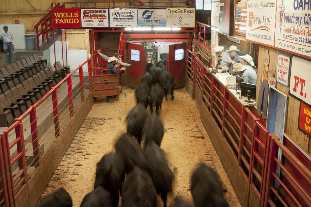 Capital Auto Auction >> South Dakota cattle sales barns hosting meetings to plan ...