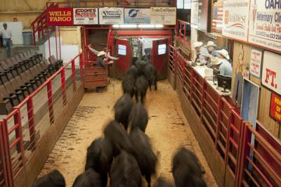 South Dakota cattle sales barns hosting meetings to plan