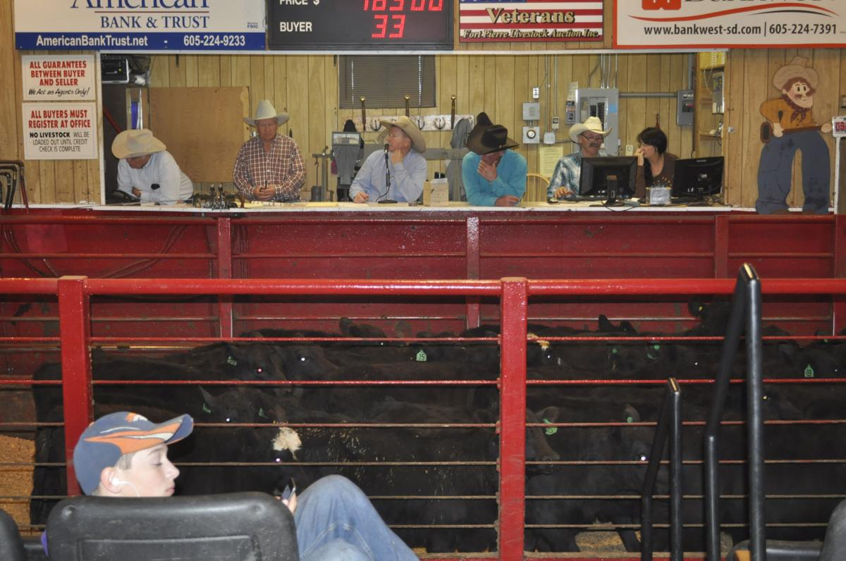 SD cattle producers and sales barns working to avoid what