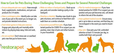 Tips for caring for pets during COVID-19
