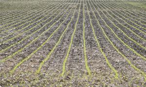 Agronomists: SD farmers might need to switch corn varieties as planting goes late