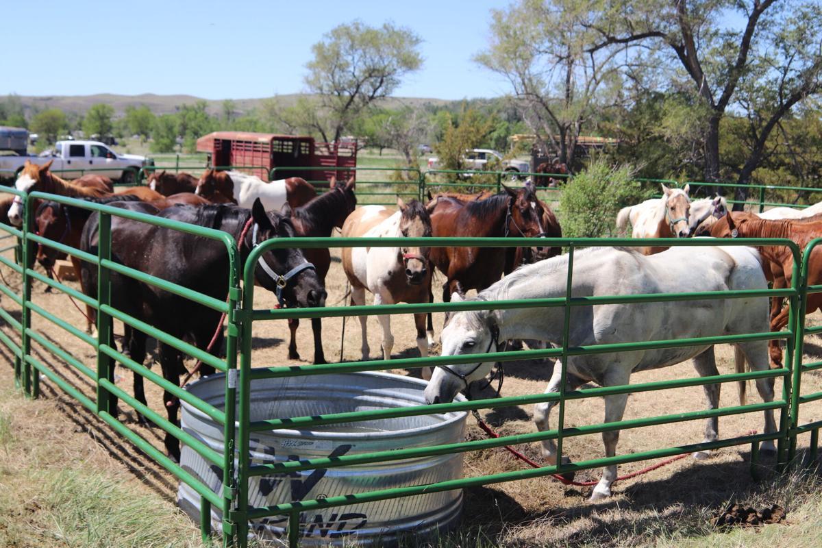Farm Island horses