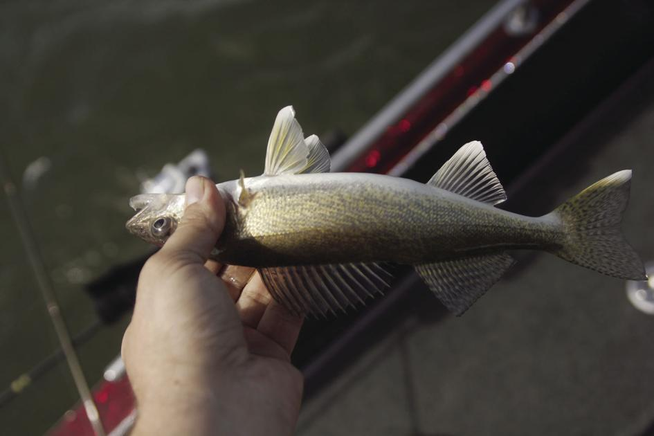 GFP fisheries staff to discuss Lake Oahe at meeting in Pierre