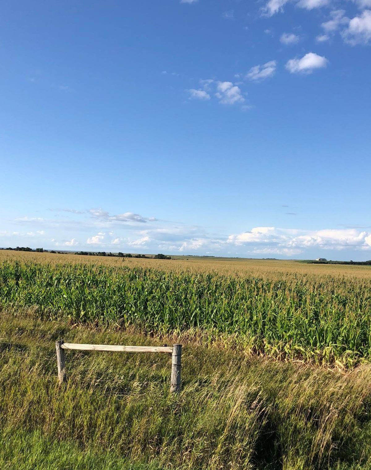 kubik crops