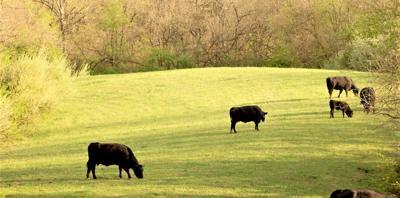 Mixed bag on farmland values and rental rates