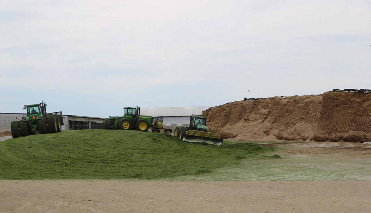 Moisture is critical when harvesting silage during a wet year