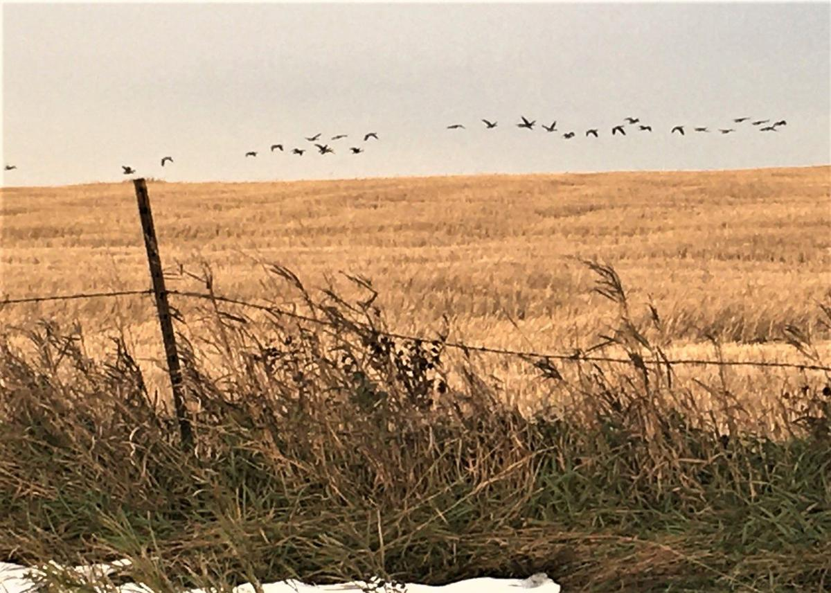 Waterfowl migration, hunting conditions shift with weather ...