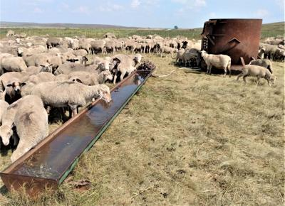 Finding the right water solutions for a rotational grazing plan