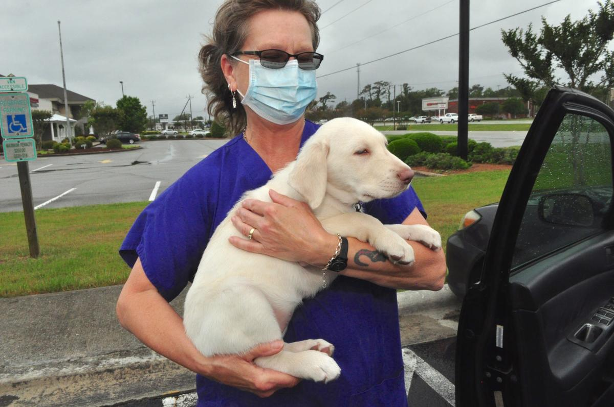 Pets can get coronavirus, but vets say no cause for concern
