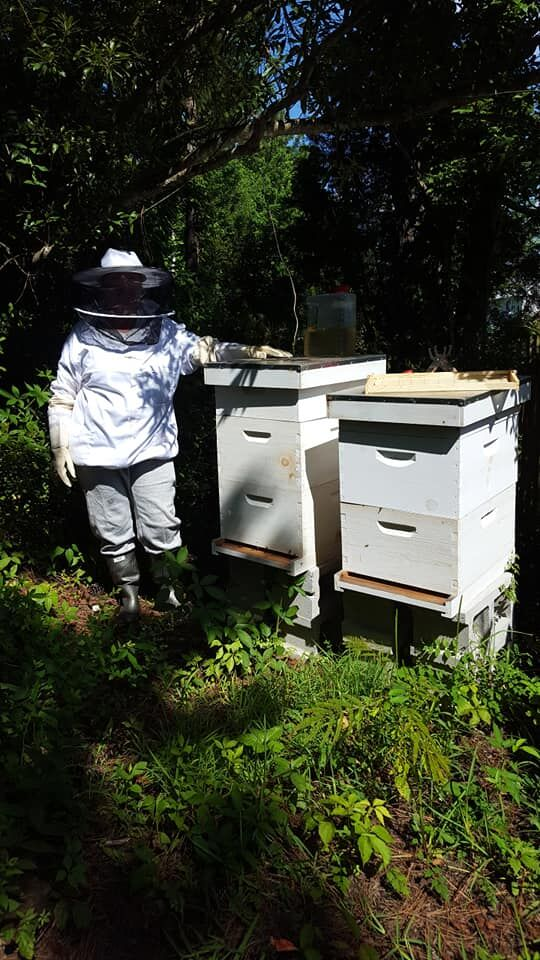 Cape Carteret applies to become a 'Bee City'