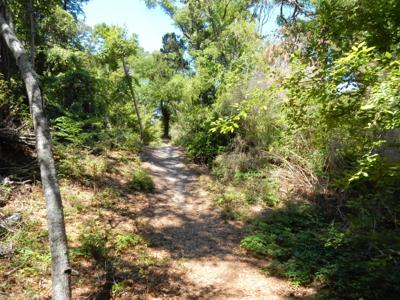 Pine Knoll Shores planners recommend easements to preserve 15 acres of maritime forest