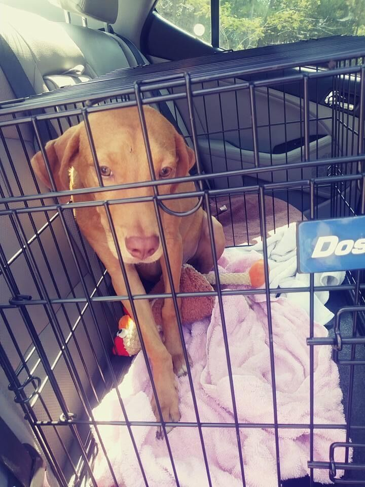 Former shelter dog makes big splash in books, social media