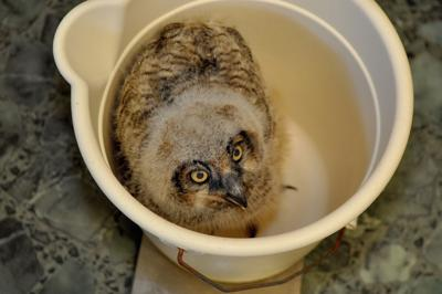Outer Banks Wildlife Shelter gears up for busy baby animal season