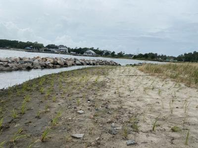 NC Coastal Federation wraps up Atlantic Harbor shoreline project with plantings