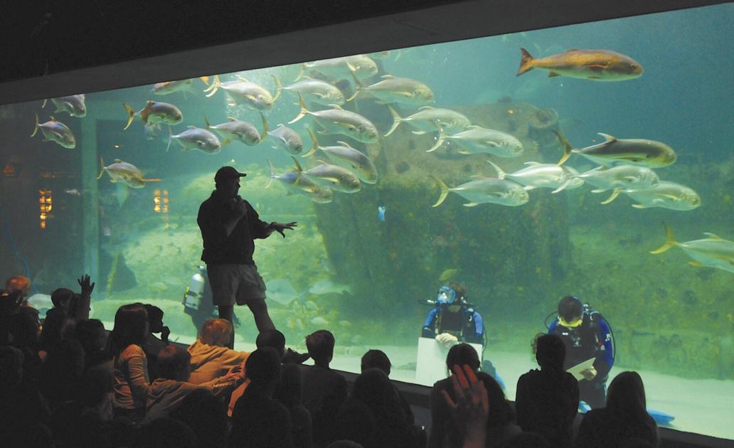 NC Aquarium at Pine Knoll Shores reopens Monday | News ...