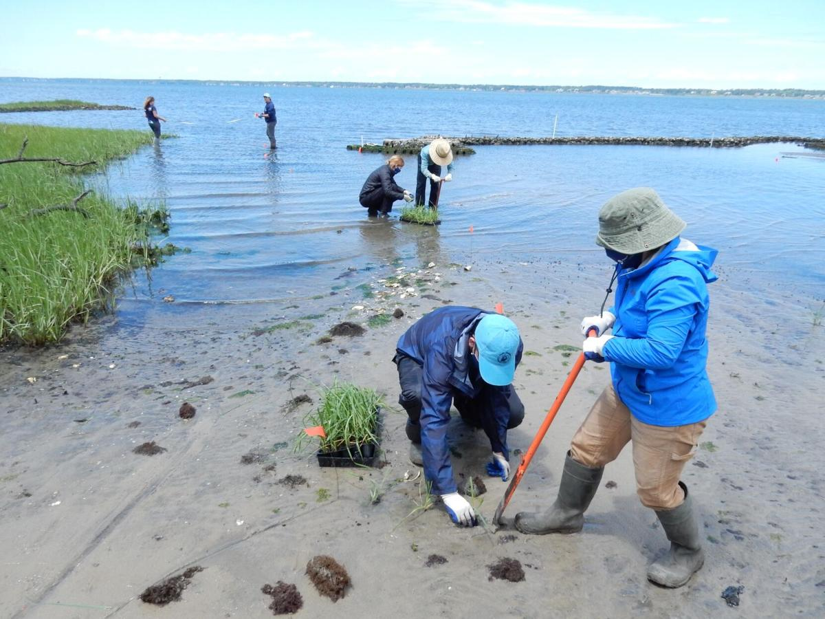 NC Coastal Federation, partners work on living shoreline at Pine Knoll Shores Town Hall