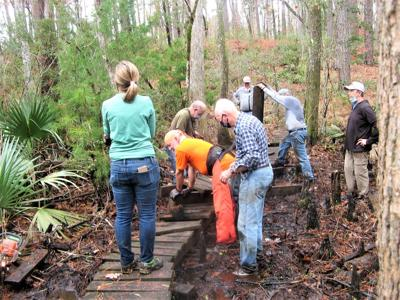 Carteret County Wildlife Club restoring Neusiok Hiking Trail