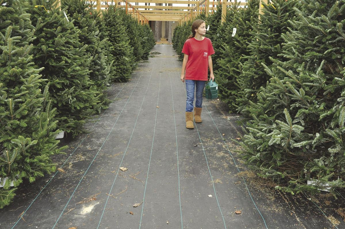 Tree lots stocked for Christmas | News