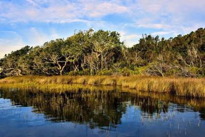 Planning commission recommends partial rezoning for NC Coastal Federation land