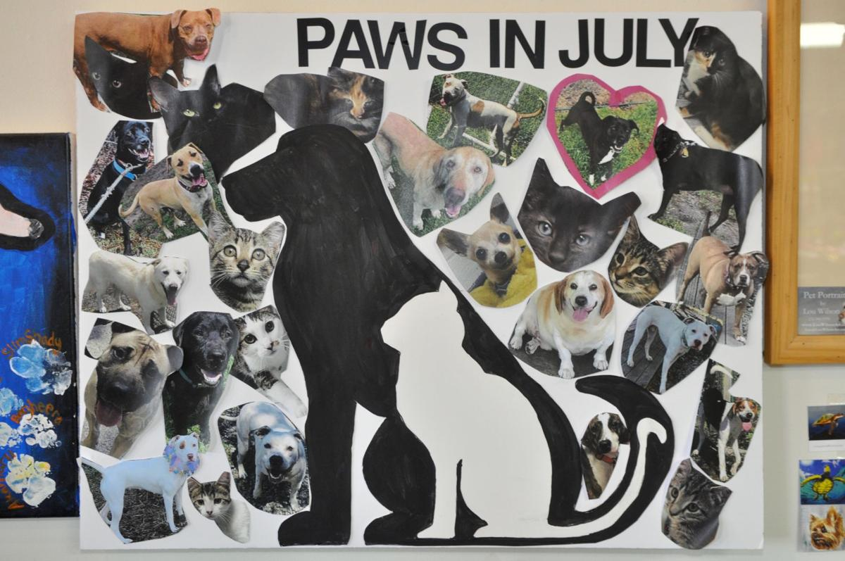 Supply drive underway for Carteret County animal shelter